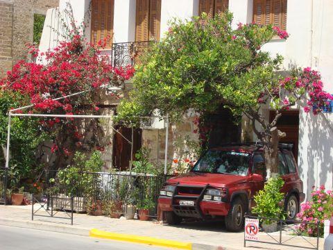 Критские деревья