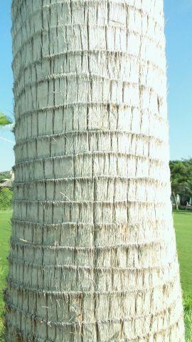 деревья в Турции