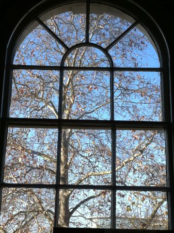 Деревья в Лондоне