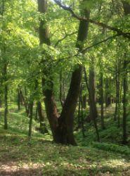 Деревья в Царицыно
